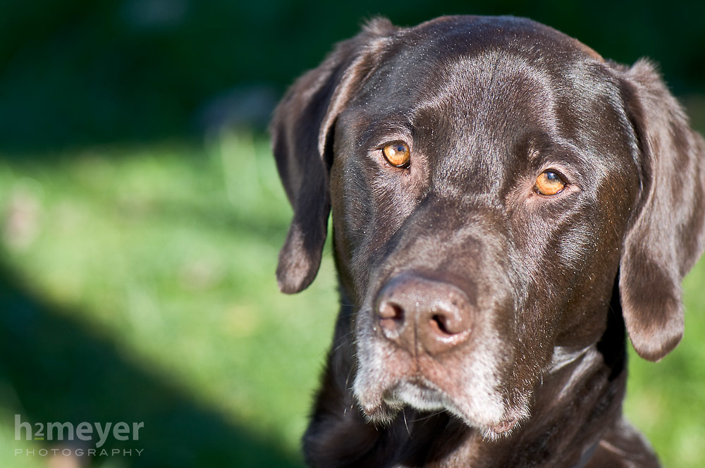 Pointer mix.  Owner Matthew Cenal , Pet Portrait Photography