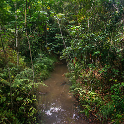 """""""Córrego (rio) fotografado em Linhares, Espírito Santo -  Sudeste do Brasil. Bioma Mata Atlântica. Registro feito em 2015.<br /> <br /> <br /> <br /> ENGLISH: Stream photographed in Linhares, Espírito Santo - Southeast of Brazil. Atlantic Forest Biome. Picture made in 2015."""""""