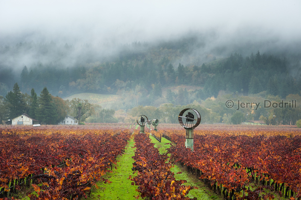 Windmills during a winter storm in vineyards near Calistoga, Napa Valley, California