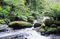 Australia Queensland stream in rainforest