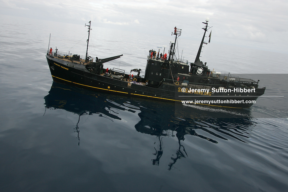 Sea Shepherd Organisation ship 'Farley Mowat', tries to undertake actions against the whale factory ship the Nisshin Maru. Southern Ocean.  08.01.2006