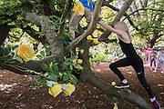 Yellow roses, a symbol of friendship, adorn a tree near the shed of stories as part of the Love thy Neighbour theme -  The 2016 Latitude Festival, Henham Park, Suffolk.