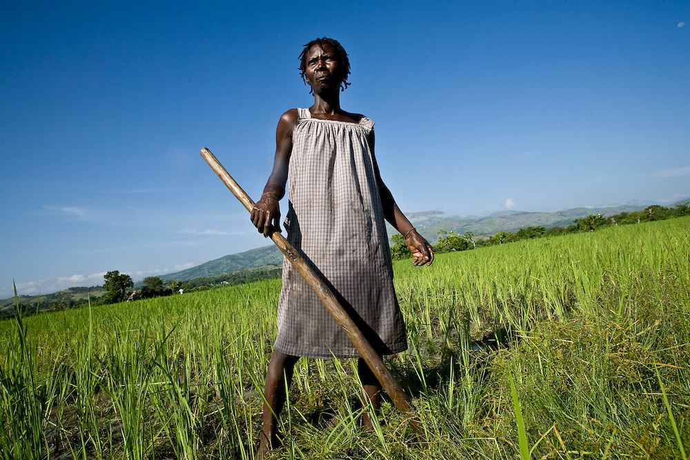 A Chemen Lavi Miyò client works in her new rice field as part of her microenterprise. Boukan Kare, Haiti.  Photo by Ben Depp. 9/18/2008.
