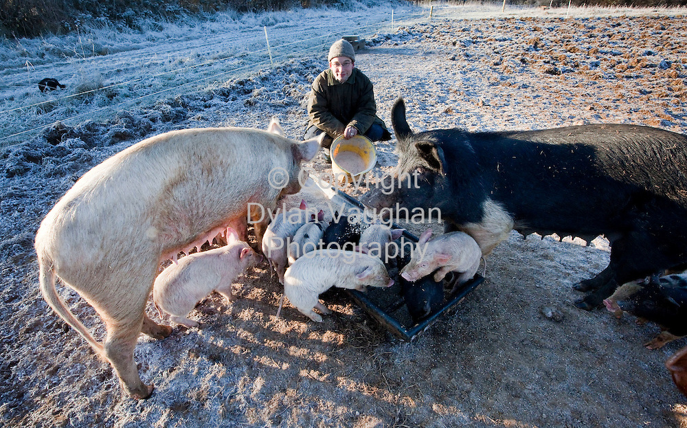 8/1/2008.Dominic Leonard with his organic pigs at Castlewood House, Durrow, Co Laois..Picture Dylan Vaughan.
