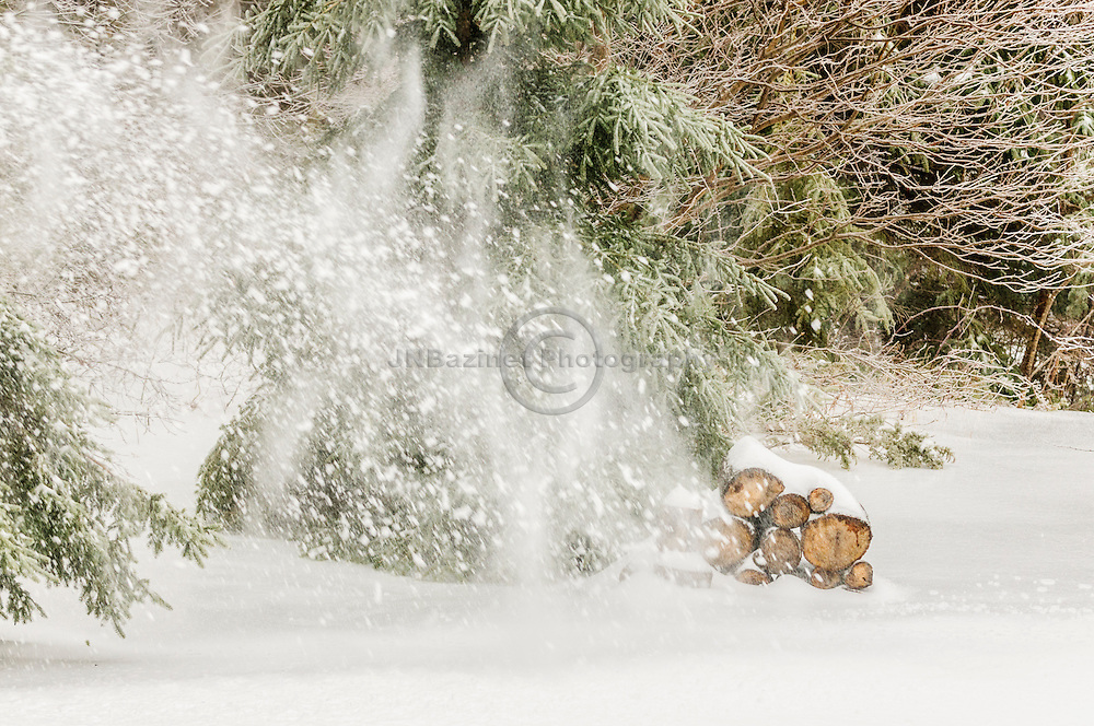 Snow storm moves across wood pile in the forest
