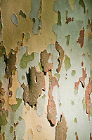 Chateau de Sauvage, France.  Interesting texture of tree bark - almost like a jigsaw puzzle  pattern.