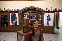 Artifact-SiTE:LAB one night art exhibition in the Edgewater area of Chicago, curated by Paul Amenta, with photographs by Tom Wagner and collaborative installations with Paul Amenta and Tom Wagner featuring photographs and educational display boxes from the Grand Rapids Public Museum (GRPM). This show is the result of a long term project to create greater community engagement with the GRPM archive, the repository of 150 years of local history. the project consisted of art shows, a website and blog and publications.<br /> The work in the show included 'educational boxes,' portable exhibits of taxidermy animals and as well as models/moquettes of the dioramas in the museum.<br /> Closed to the public once the late 1980s when the new museum was built, the original GRPM was the first museum constructed under the WPA program, completed in 1938, the museum houses original dioramas from the 1940's.