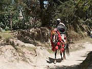 A man carrying a traditional Ethiopian shield riding a horse with decorative headdress, Kotoba, Ethiopia.