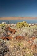 volcanic rock, grass and shrubs along the shoreline of Abert Lake, a large inland salt water (alkalai) lake in Southern Oregon.