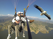 A real bird's eye view! Welcome to 'parahawking', the quirky sport that allows you to soar through the sky with VULTURES<br /> <br /> It's certainly a novel way to improve the interaction between man and bird. <br /> A new sport has been launched which gives paragliders the opportunity to interact with vultures as they glide above the land: Parahawking.<br /> Invented by avian expert Scott Mason to highlight the plight of Asia's endangered vultures, the sport combines ancient falconry methods with the modern techniques of paragliding, where both parties use rising currents of warm air to glide high above the land.<br /> <br /> Birds of prey are able to gain height and fly long distances without flapping their wings,' explains Mason. <br /> 'We as paragliders harness their natural ability to conserve energy by following them as we fly.'<br /> During the flight paragliders place small morsels of meat onto their gloved hands and the birds gently land to take the food, then fly gracefully away to find the next thermal.<br /> 'It's a perfect symbiotic relationship,' Mason said.<br /> <br /> 'Parahawking has gone from a personal experiment to a global phenomenon whereby several hundred people each year are taken on a tandem flight and given the unique opportunity to fly and interact with a bird of prey in its own environment.'<br /> <br /> Asia's vultures are virtually on the brink of extinction due to a drug called Diclofenac, an anti-inflammatory drug commonly administered to sick and dying livestock across Asia which is poisonous to vultures. <br /> When the birds feed from animal carcasses that have been treated with Diclofenac, it causes renal failure and death. <br /> The White Backed Vulture, The Slender Billed Vulture and the Long Billed Vulture have declined 99.9 per cent in the last 15 years, meaning 40 million birds have died.<br /> 'Vultures are often misunderstood and have a rather unsavory image,' says Mason. <br /> 'By using vultures for Parahawking we hope