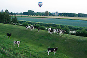 Ballonvaart bij Breda<br /> <br /> An air balloon above cows nearby Breda