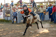 Hunter Schroeder holds on during the mutton busting competition during the kids rodeo at the Christian County Fair on Friday, July 6, 2018.