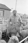 Dublin Cattle Market. Michael Conlon, a mixed farmer from Navan, Co. Meath..25.04.1962