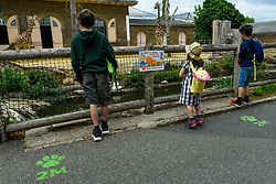 © Licensed to London News Pictures. 15/06/2020. LONDON, UK. Young visitors, next to social distancing signs, view giraffes, Mollie and Maggie, on the reopening day of ZSL London Zoo, the first day that the zoo has been open to the public since March following the coronavirus pandemic lockdown. The staff have applied social distancing signage around the premises for the safety of visitors. The UK government has relaxed Covid-19 restrictions allowing non-essential shops, zoos and safari parks to reopen to the public from 15 June.  Photo credit: Stephen Chung/LNP