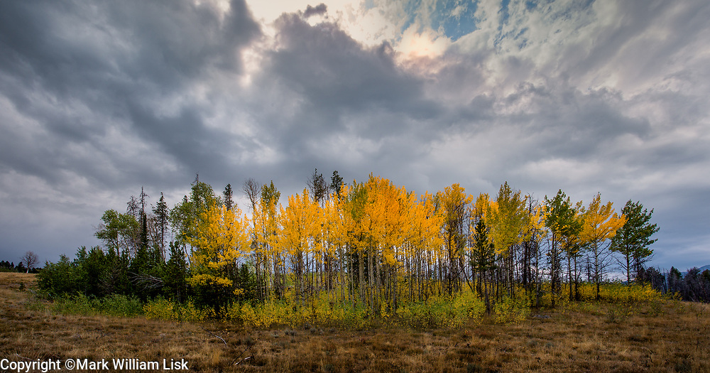 Aspen in fall foliage in the Pole Creek Valley, White Cloud Range.