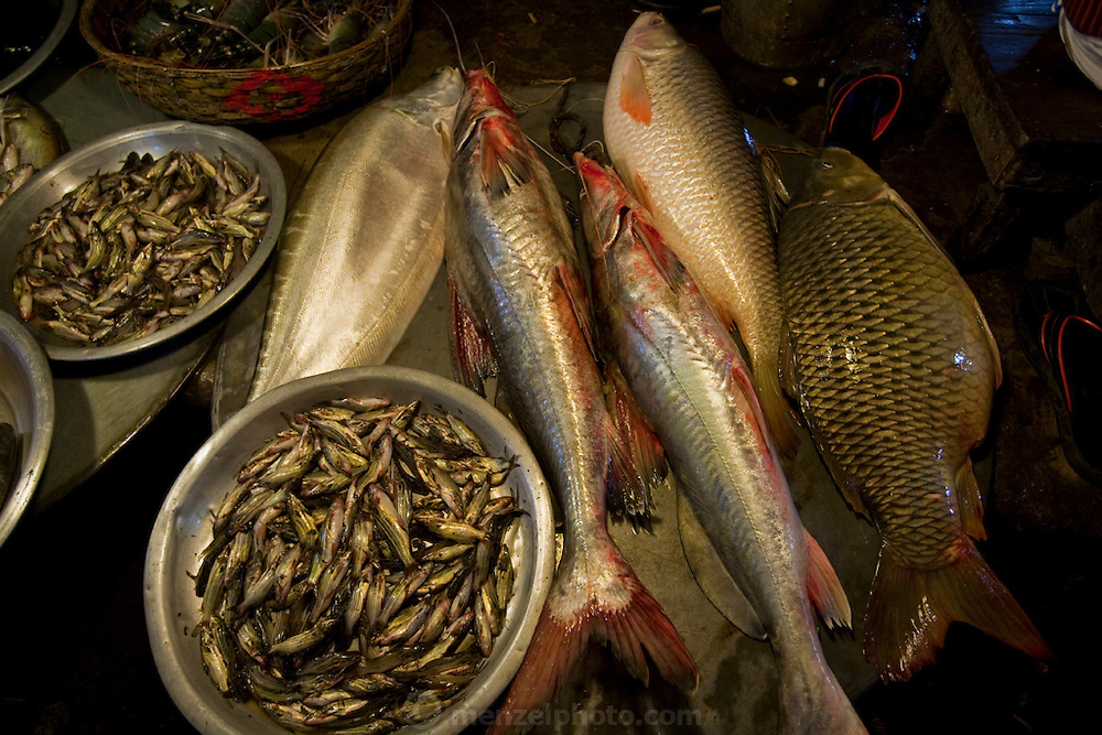 Sardines and other varieties of fish are displayed for sale at the Santinagar  market in Dhaka, Bangladesh.