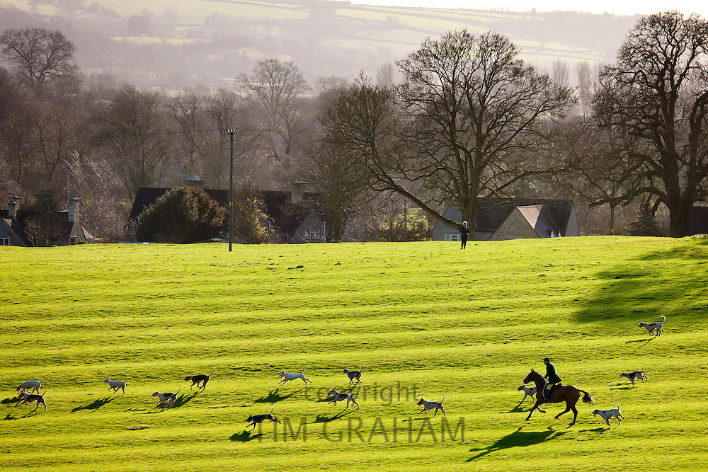 Foxhounds of The Heythrop Hunt near Stow-on-the-Wold, Gloucestershire for the traditional New Year Hunt Meet, Cotswolds, UK