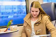 Papegaai in de trein