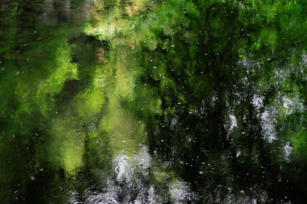 Reflection in water near the Schiessentümpel, Mullerthal trail, Mullerthal, Luxembourg