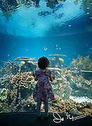 A young girl looks out in wonder at the Blacktip Reef exhibit at the National Aquarium in Baltimore, MD.