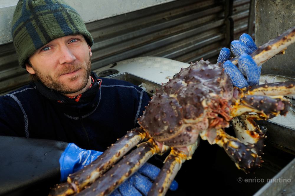 Trym Johansen, a fisherman, with a giant King Crab on his boat near Honningsvag. First introduced to the Barents Sea off northern Russia in the 1960s, red king crabs (Paralithodes camtschaticus) are now spilling down western Norway by the millions. Some fishing communities in northern Norway say the crab, among the largest in the world, has already had a devastating impact. <br /> Others welcome the red king crab, saying its delicious taste and size make it an extremely lucrative catch.