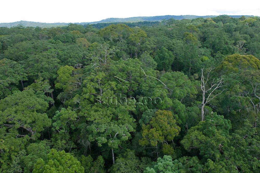 Dense forest in Maliau Basin, Sabah, Borneo, East Malaysia.