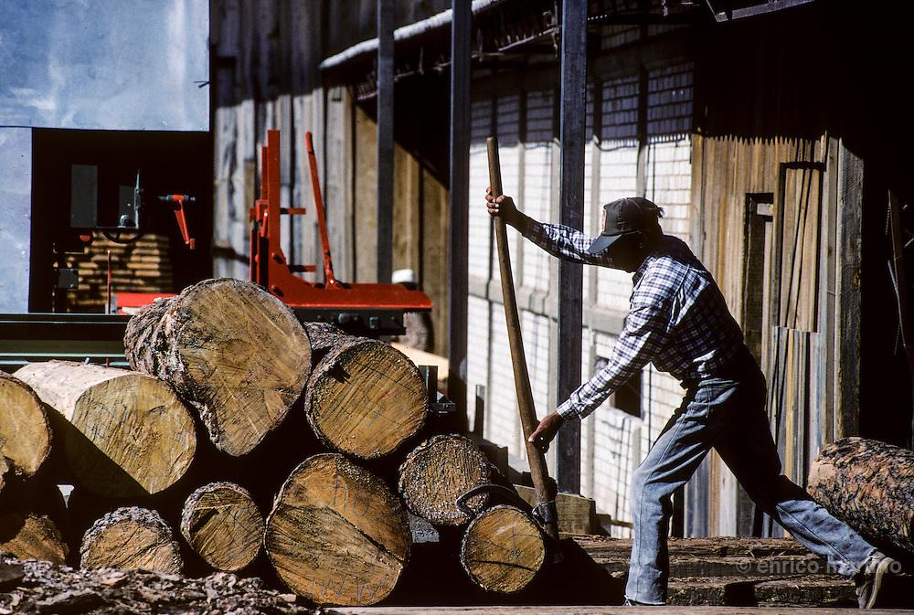 Copper Canyon (Barranca del Cobre): Creel, timber's indiscriminate cutting  is a real danger for Barranca ecosystem.