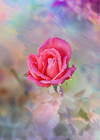 The meaning of pink roses is as beautiful and as graceful as the delicate blossom. They're often seen in bridal arrangements, thank you or congratulations bouquets. Considering the word &quot;rose&quot; brings to mind the faint blush of a fair maiden's cheeks, it's not surprising these blooms are a favorite to give and receive. <br />