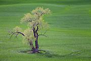 Velvet Grasslands of Palouse Washington