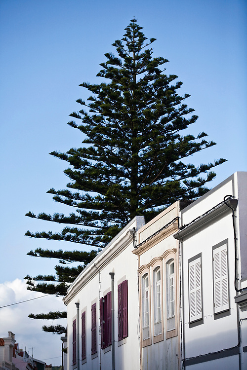 A tree rises above a house in Horta. Horta is on the island of Faial. One of of the Azores, which is  a group of islands in the Atlantic that are a part of Portugal and the European Union. Horta is a popular stop for yachts crossing the Atlantic in the Spring time to return to Europe.