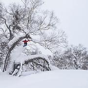 Kolby Ward, Rusutsu Japan.