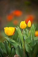 20090413 Spring Blooms