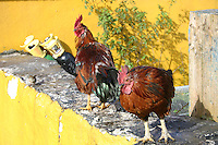 Two hens on yellow wall, west of Ireland