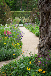 Lupins and aquilegia in the Rose Walk borders at Hidcote Manor Garden