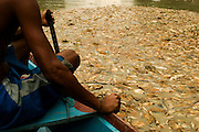 Thousands of dead fish from drought clog the Furo do Lago Cristo Reis (river of Cristo Reis lake), an affluent of the Amazon river near Manaus, Brazil, in 2005..©Daniel Beltra/Greenpeace