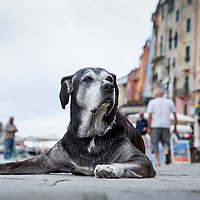 Italy, Liguria, La Spezie Province, Dog resting on sidewalk of waterfront fishing village of Portovenere along Mediterranean Sea on spring morning.