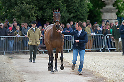 Hunt Laurence, (GBR), Wie Donna S Neiiuewmoed<br /> First Horse Inspection - Mitsubishi Motors Badminton Horse Trials <br /> Badminton 2015
