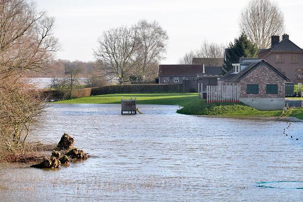 Nederland, Nijmegen, ooijpolder, 7-1-2018 Het waterpeil van de rivier de Waal stijgt . De uiterwaarden lopen onder. Het vee is naar hoger land gedreven. Dinsdag wordt de hoogste stand van deze golf bereikt.Foto: Flip Franssen