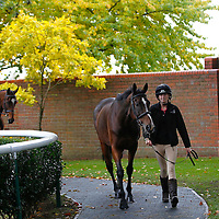 Newmarket 21st October