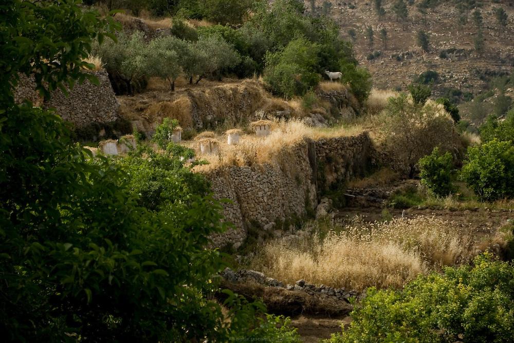 Village de Battir, où la source est partagée par les habitants. En 2011, Battir a reçu le prix Mélina Mercouri de l'UNESCO pour son agriculture en terrasses, patrimoine historique. Battir, ouest de Bethléem, Territoires Palestiniens, mai 2011