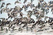 Seabirds take flight on the beach at Jacksonville, Florida.