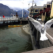 Seagulls fly near the TSS Earnslaw, the 100 year old vintage coal fired passenger steam ship which sails on Lake Wakatipu, Queenstown, New Zealand. The popular tourist attraction is celebrating it's centenary year with celebrations planned for October 2012.  Queenstown, Central Otago, New Zealand. 29th February 2012. Photo Tim Clayton