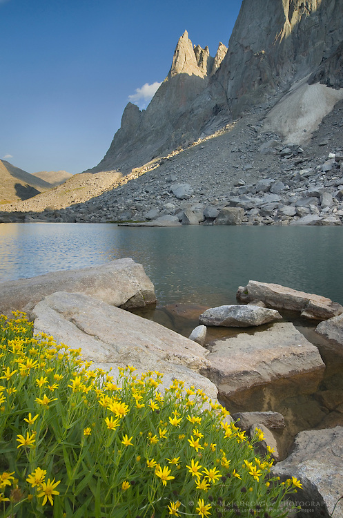 War Bonnet Peak in the Cirque of the Towers, Yellow Aster wildflowers are in the foreground, Popo Agie Wilderness, Wind River Range Wyoming
