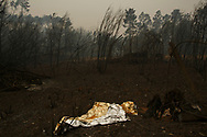 LEIRIA, PORTUGAL - JUNE 18:  A thermal blanket lays on the ground in the forest after a wildfire took dozens of lives on June 19, 2017 near Castanheira de Pera, in Leiria district, Portugal. On Saturday night, a forest fire became uncontrollable in the Leiria district, killing at least 62 people and leaving many injured. Some of the victims died inside their cars as they tried to flee the area.  (Photo by Pablo Blazquez Dominguez/Getty Images)