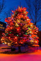 A Christmas tree at twilight, Littleton, Colorado USA