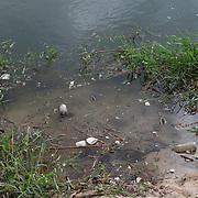 Plastic pollution on the San Jose Estuary in San Jose del Cabo, BCS.