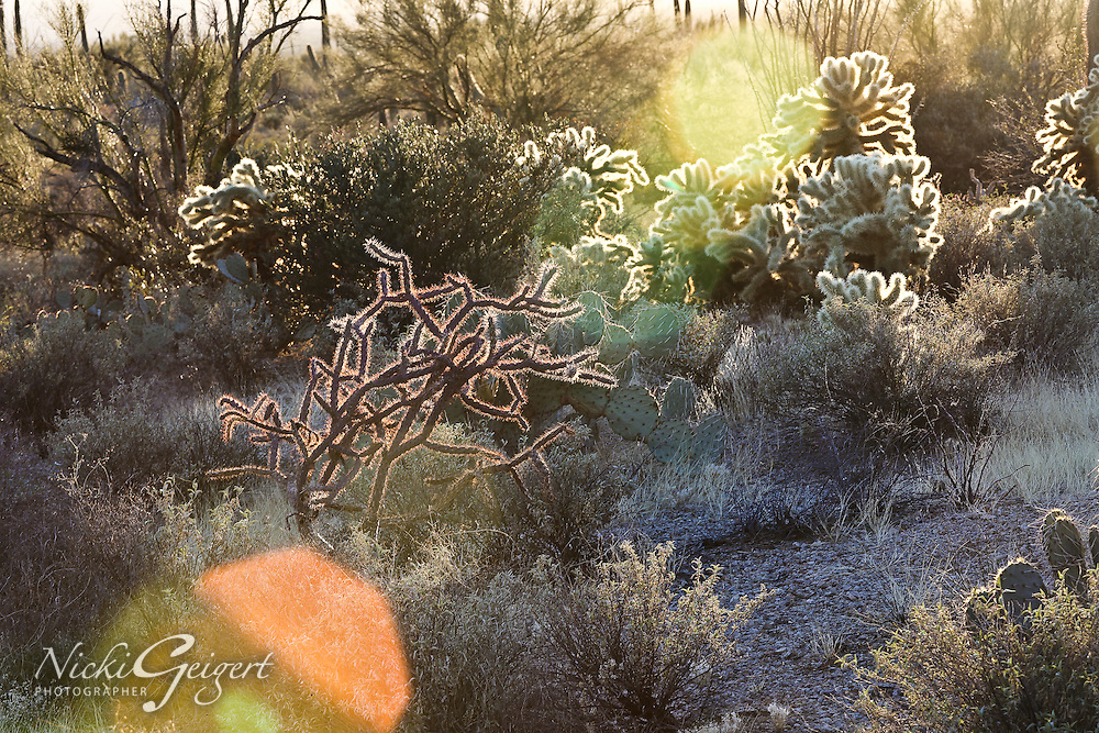 Rugged desert landscape with a variety of cactus, California. Landscape and nature photography wall art for sale. Fine art photography prints, stock image.
