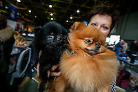A woman shows her  Spitz Pomeranian dog sat the 50th Euro Dog Show in Kortrijk, Belgium, 16 November 2013.