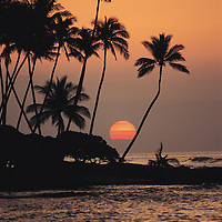 Sunset with palm tree silhouettes at The Orchid at Mauna Lani on the South Kohala Coastine of the Big Island of Hawaii