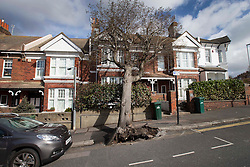 © Licensed to London News Pictures. 28/03/2016. Brighton, UK. A tree has fallen onto the front of a house as storm Katie hits the south coast. Photo credit: Peter Macdiarmid/LNP